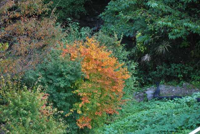 霧の森紅葉